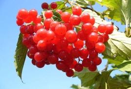 Любимое растение Калининского района